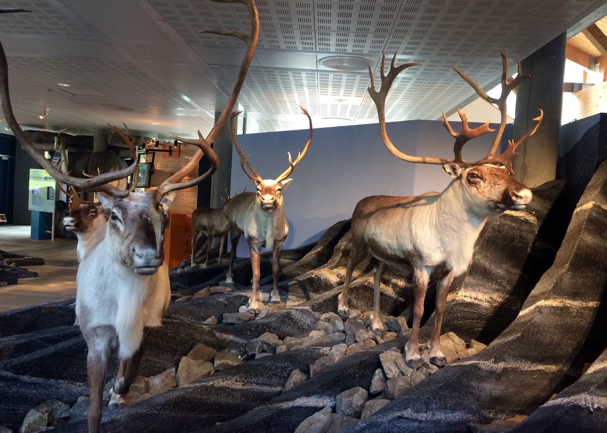 Hardangervidda natursenter