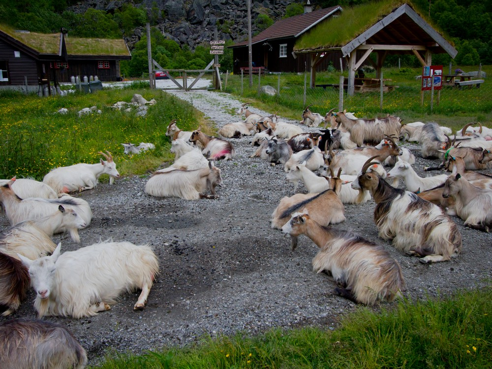 Spacer z Flåm do Myrdal