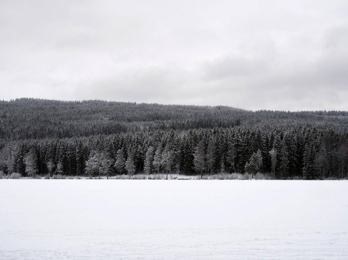 Norweska owsianka Rømmegrøt