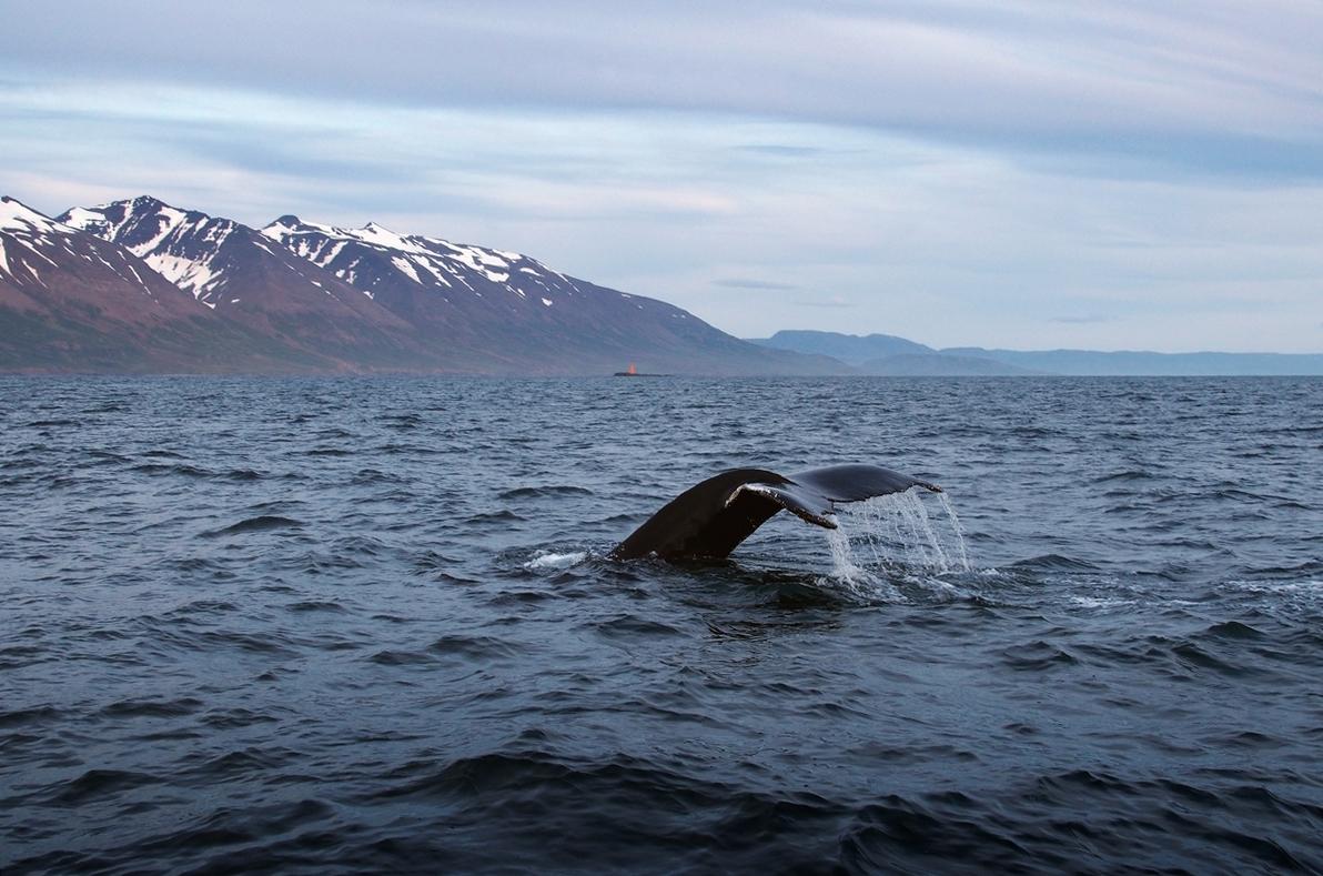 Akureyri. Stolica północnej Islandii