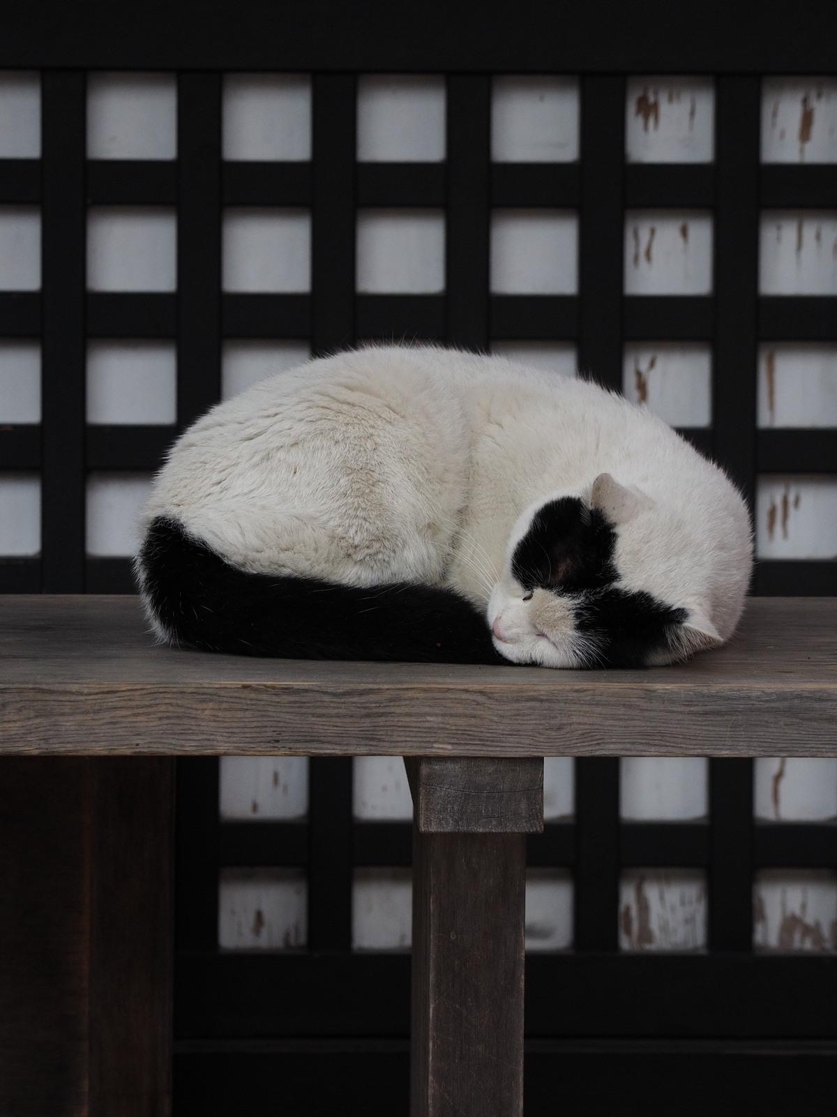 Koty Japonii
